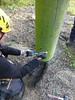 Independent #inspection of adventure constructions in accordance with EN-15567. #safety http://j.mp/1wbZnpK (Skywalker Adventure Builders) Tags: high ropes course zipline zipwire construction design klimpark klimbos hochseilgarten waldseilpark skywalker
