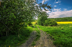 Path (ErrorByPixel) Tags: poland silesia lower bogatynia path road gravel green blue tree trees bush ground sky cloud clouds nature errorbypixel pentax k5 samyang 162 grass field