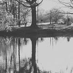 reflections b&w thumbnail