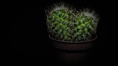 Miniature cactus.. (robdando) Tags: macromondays lowkey cactus nikon