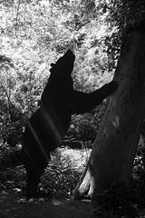 DSC06724 (olliethewino) Tags: blackandwhite bristol bear silhouette wildplace