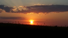 Sunset (vibeke2620) Tags: sunset may denmark countryside silhouette