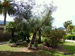 Mallorca '15 - Andratx 14.Jpg (Stappi70) Tags: urlaub spanien park palausonmas mallorca garten gärten flora andratx
