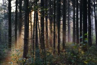 Sunrise thru the tree's Doorn The Netherlands 2