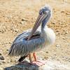 0079 (didj34) Tags: 2010 julie sigean zoo
