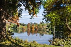 Autumn at the park (Kiwi-Steve) Tags: nz newzealand northisland tauranga mclarenfallspark autumn trees lake nikond7200 nikon colourful color reflection