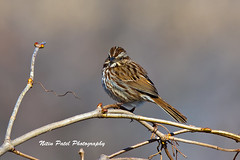 IMG_4880-2 (nitinpatel2) Tags: bird nature nitinpatel