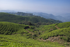 Munnar, India (APT_Allison) Tags: travel india munnar vacation holiday landscape