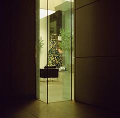 O Tannenbaum (bior) Tags: christmastree otannenbaum officebuilding office portra160vc expiredfilm kowasix kowa kowa6 6x6cm mediumformat 120 square squareformat sanjose downtownsanjose
