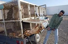 In Marocco vergognosa strage di cani randagi: ecco il motivo e i precedenti (mondoanimale) Tags: marocco cani