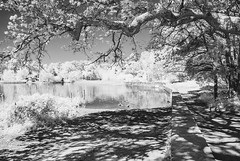FrenshamIR_DSC_1459 (Nick Woods Photography) Tags: landscape waterscape trees treereflections treetrunks water waterreflections treebranches greenery reflections reflectionsinwater nationaltrust nt frensham frenshamponds frenshamcommon frenshamheath crenshawlittlepond surrey mono monoimage bw bwimage infrared infraredlandscape infraredscenery infraredvegetation infraredtrees infraredconvertedcamera