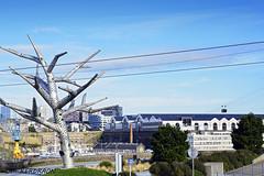 vue sur l arbre sympathique et le plateau des capucins à Brest (Bretagne, Finistère) (pascalkerdraon) Tags: france bretagne brittany finistere brest siam arbre emphatique telephérique tramway tram capucins arsenal plateau