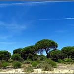Mazagón (Huelva) (Spain) thumbnail