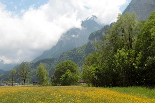 Blumenwiese bei Innertkirchen im Haslital im Berner Oberland im Kanton Bern der Schweiz