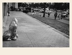 Je vous surveille (Napafloma-Photographe) Tags: 2018 architecturebatimentsmonuments bandw bw bã¢timents france gã©ographie hautsdefrance letouquet natureetpaysages pasdecalais personnes techniquephoto animaux blackandwhite boutique gorille monochrome napaflomaphotographe noiretblanc noiretblancfrance photoderue photographe province statue streetphoto streetphotography