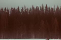 6 (Sofia Podestà) Tags: sofiapodestà photography cortina cortinadampezzo dolomiti fog winter snow white nature adventure pines wood fiames dolomites mountain