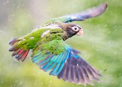 Rainy flight (cbjphoto) Tags: photography carljackson costarica