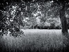 18.05.2018 sad face tree (FotoTrenz NRW) Tags: tree nature grass meadow blackandwhite bw bnw monochrome hohesgras baum laub natur wiese