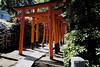 At Nezu Shrine (Lillakanarie) Tags: azalea flowers tokyo japan green sigmadp0quattro religiousicongrpshinto