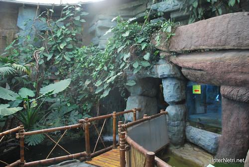 Екзотаріум Ботанічного саду імені Гришка, Київ InterNetri  Ukraine 07