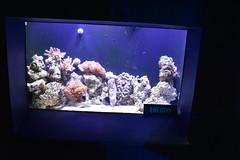 Urchins (Adventurer Dustin Holmes) Tags: 2018 wondersofwildlife urchins animal animals aquarium corral saltwater museum exhibit display reef