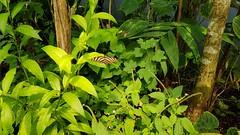 20180523_110915 (TheSlayerNL) Tags: wildlands emmen zoo dieren animals adventure wildlandsadventurezoo