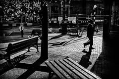 X (The Glass Eye) Tags: nottingham may 2015 street silhouette urban furniture tree bench man panasonic gx7 olympus1240mmf28