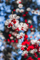 Dogwood Flowers (Yaecker Photography) Tags: bigtrees caleveras sequoia dogwood dogwoodtrees park statepark trees spring flower wildflower tree aspentrees forest