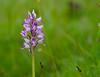 Orchidee im Lampertsbachtal (clemensgilles) Tags: fleurs orchid orchidee flowers blumen eifel deutschland germany beautiful