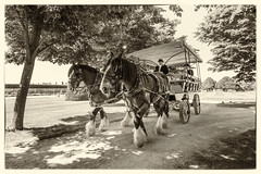 Charabanc, Hampton Court Palace (Aliy) Tags: girlstrip london hamptoncourt palace garden gardens charabanc horse horses two pair shirehorse shirehorses
