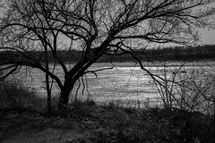 low key river (fallsroad) Tags: tulsaoklahoma riversidepark arkansasriver tree trees blackandwhite bw monochrome sun reflection