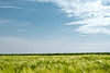 Barley Field (enneafive) Tags: landscape barley sky clouds pastoral bucolic green light fujifilm xt2 agriculture lines spring