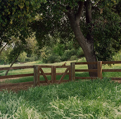 Bernal Ranch // Santa Teresa County Park (bior) Tags: hasselblad500cm portra160nc kodakportra portra mediumformat 6x6cm 120 square santateresacountypark bernalranch grass hiking expiredfilm carl zeiss planar squirrel fence gate oaktree