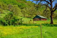 DSCF1426.jpg (RHMImages) Tags: grass xt2 landscape horse barn openspace hillside mustard dogbarroad grassvalley fujifilm fuji