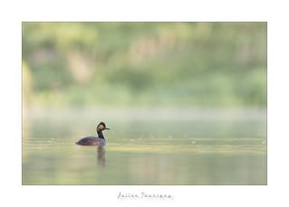 Premières lueurs sur l'étang...