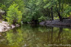 Sunol  Regional Wilderness (katiewong511) Tags: sunolregionalwilderness ebpark sunol trees creek spring flowers ebparks trails hiking bay area california eastbaypark