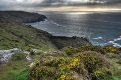 The North Cornish coast on Penwith (Baz Richardson (now away until 21 June)) Tags: cornwall cliffs rocks gorse sunset botallack penwithpeninsula coast