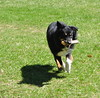 4/12 Months for Maddy (ginam6p) Tags: 12monthsfordogs toronto grass fetch