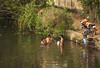 A Communal Dip, Backwaters, Kerala, India (Steve Weaver) Tags: backwaters kerala india water waterway ferry travel dip swim men motorbike