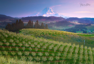 Hood Valley Orchards And Mt Hood