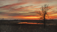 Bleed An Open Vein (Neha & Chittaranjan Desai) Tags: landscapes nature sunset lone tree stream sky colors clouds usa illinois