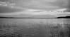Le quotidien du lac en mai... (Argentique) / Morning life on the lake... (Film) (Pentax_clic) Tags: 7 • minutes rollei anse vigilant outardes 2018 400s vaudreuil six16 warren kodak argentique film retro quebec printemps robert panorama nb mai bw hc110b bernaches
