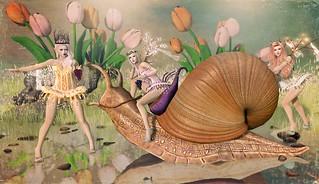 The Joys of Snail Racing