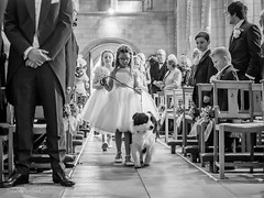 Bridesmaids and Ollie the collie (johnnewstead1) Tags: wedding weddingday weddingphotographer weddingphotography bride brideandgroom love simonwatsonphography johnnewstead olympus em1 mzuiko stbenetsminster beccles blackwhite blackandwhite monochrome