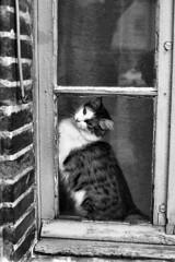 PENTAX ME SUPER Rikenon 1.7 50 FOMA 200 XTOL (Leinik) Tags: pentax me super rikenon 17 50 foma 200 xtol cat gato bw black white blanc noir blanco negro bianco nero