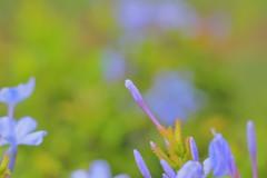 Bud (Debmalya Mukherjee) Tags: debmayamukherjee canon550d 50mm extensiontubes macro flower flora bud dof anushaktinagar