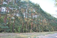 Волинський ліс InterNetri Ukraine 0781087771