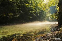 Morning mist (morbidtibor) Tags: slovenia triglav vintgar gorge vintgargorge radovna river canyon fog mist