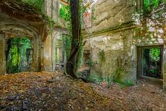Villa Romantica (Emeuh-Bru) Tags: villaromantica urbex urbanexploration explorationurbaine abandonné abandoned italia italie nikond7200 lost arbre tree