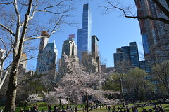 New York_ 4401 (mart.panzer) Tags: nyc 2018 spring flowerage city us bestof gerhardpanzer impressions photos pictures highlights vacation holidays people mustsee awesome cities scenic top attractions must see best beautiful newyorkcity newyork manhattan